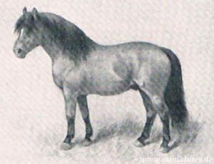 arbeiten pferd ausland